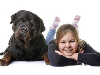 Rottweiler-Welpen und Kinder